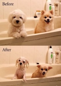 dog_before_after